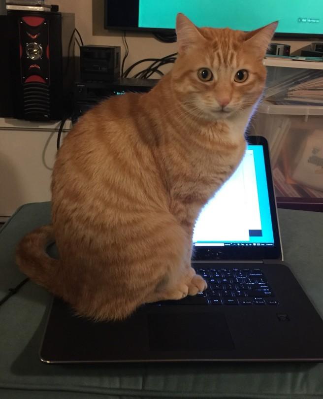 Praline on laptop.jpg
